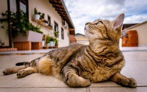 Najlepsza karma dla kotów