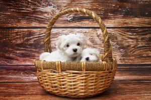 Psi fryzjer z rewelacyjnym podejściem do zwierząt