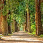 Bezpieczna pielęgnacja drzew