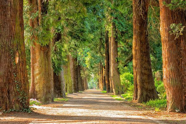 przycinanie-drzew-w-warszawie.jpg