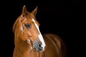 Kiedy dodać do diety konia otręby ryżowe?