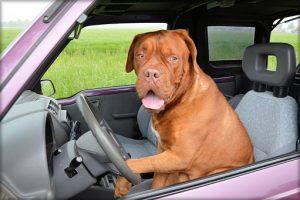 Zabezpieczający pokrowiec do samochodu