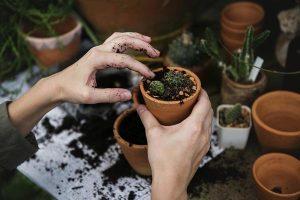 Uprawa roślin w growboxie